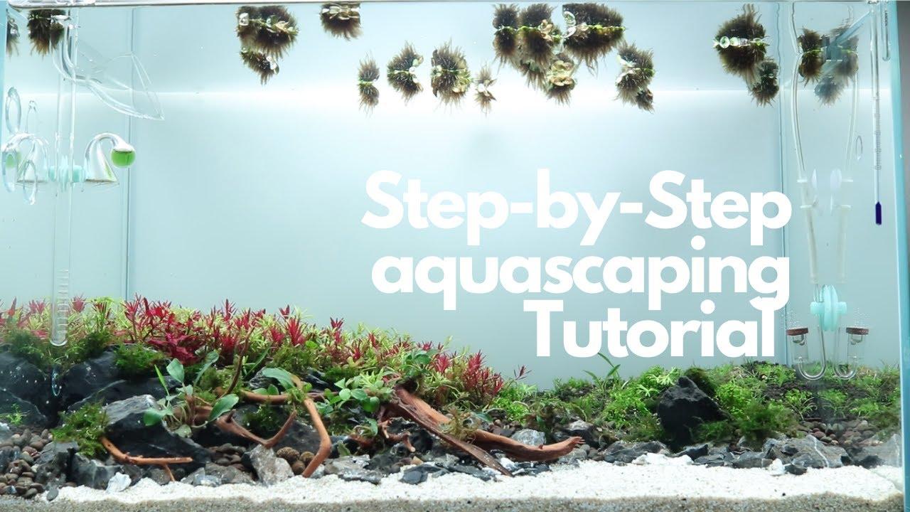 Step by Step Aquascaping Tutorial - Nature Aquarium - YouTube