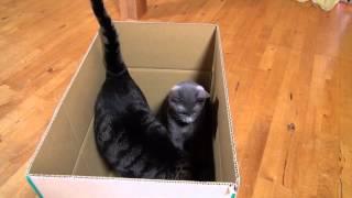 子供のところに荷物を送るため箱を準備しました。箱があると入ってみた...