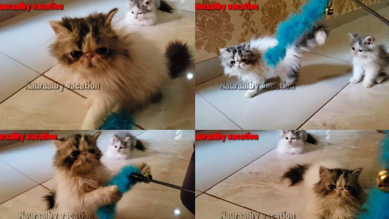 Kucing kitten lucu sedang bermain