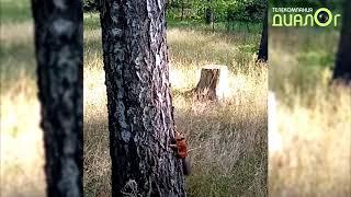 Белки в Быково (Видео-блог Евгения Степанова)