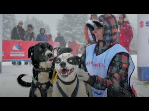 شاهد: 300 كلب يجرون زلاجات الثلج في سباق غراند أوديسي بجبال الألب…  - نشر قبل 3 ساعة
