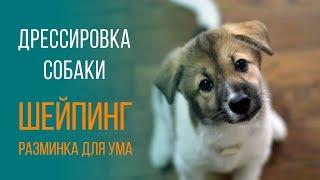 Дрессировка собаки с Татьяной Романовой. Шейпинг.