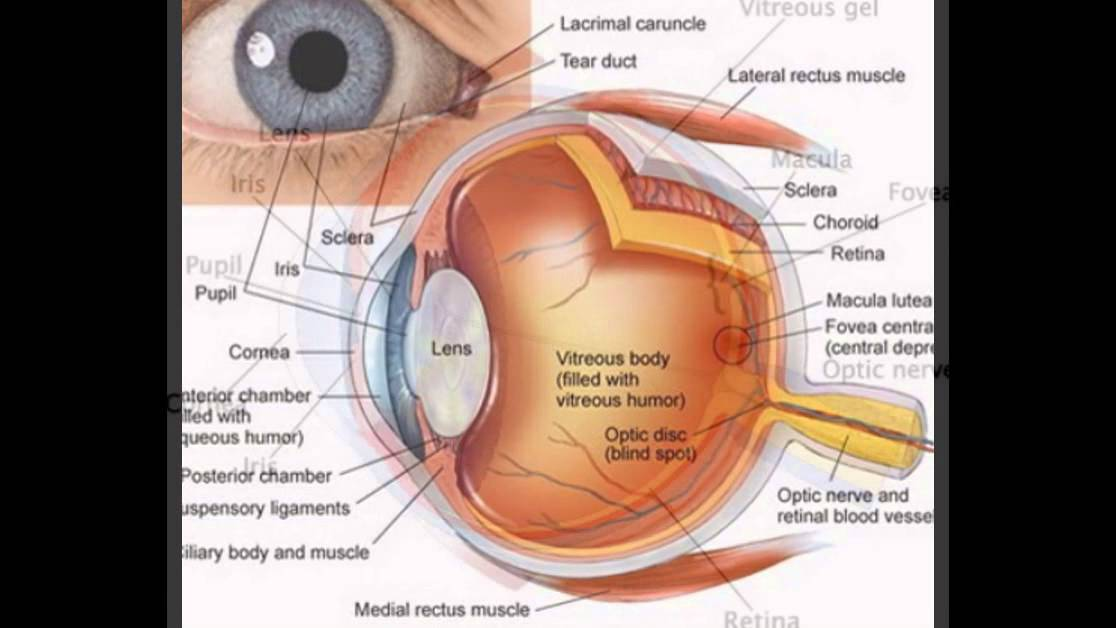 Eye diagram and functions youtube eye diagram and functions ccuart Choice Image