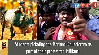Students picketing the Madurai Collectorate as part of their protest for Jallikattu