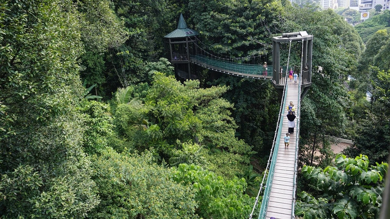 Image result for kl canopy walk
