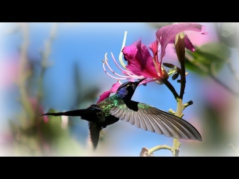 ❀ Amazing Birds - Longest Compilation