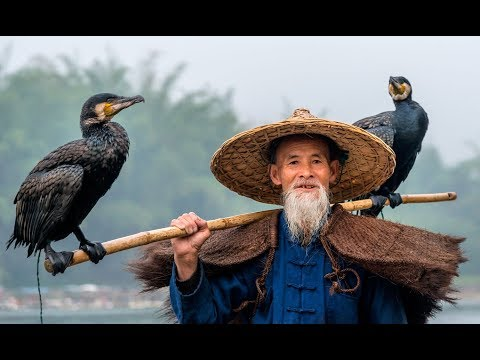 BEST Cormorant Video EVER!