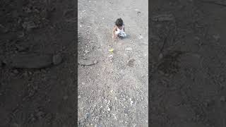 African Lovebird On Outdoor Free Flying