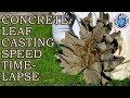 Concrete Leaf Casting | Speed Time Lapse