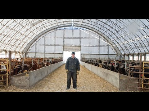 Why You Need A Fabric Building For Your Cow Calf