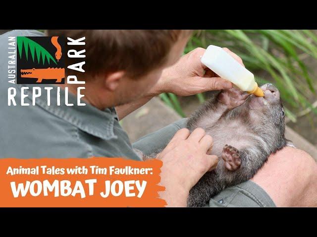 ANIMAL TALES WITH TIM | EPISODE NINE | WOMBAT JOEY