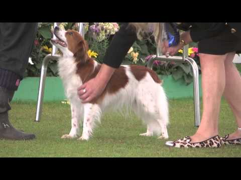 Bath Championship Dog Show 2014 - Utility group