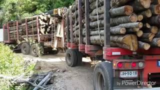 Camiones forestales rutas peligrozas