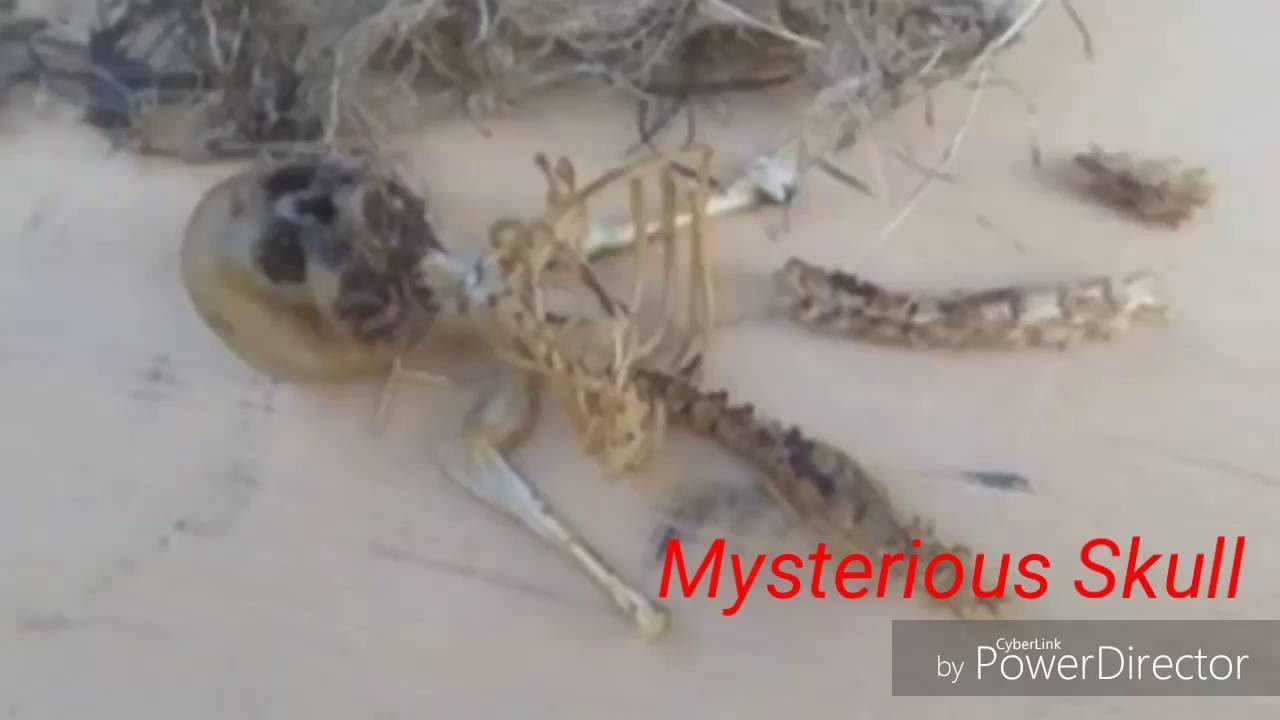 mysterious small human skeleton found - youtube, Skeleton