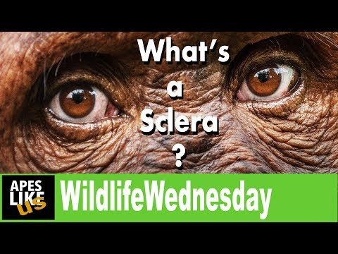 Wildlife Wednesday: What's a Sclera?