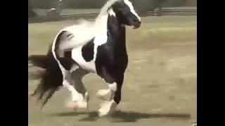 Самая красивая лошадь в мире всех времен