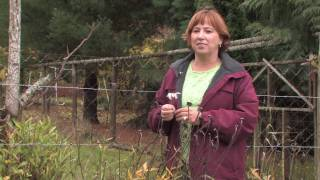 tree plant care how to prune daisies for winter
