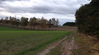 Im Wald und auf der Heide 03