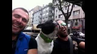 say something cover sung by emanuele and his dog junior