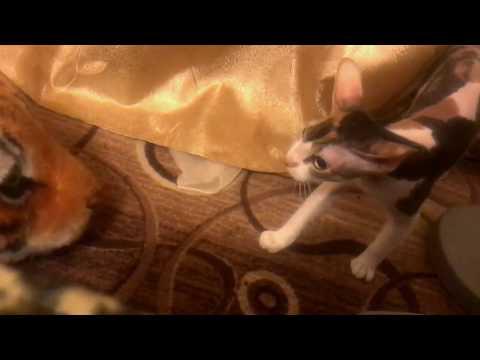 Кошка испугалась тигра-ковра