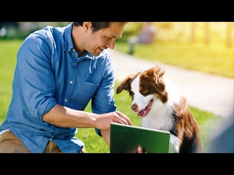 Introducing Google Play for Pets