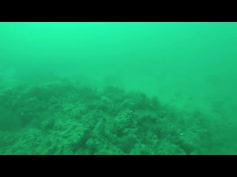 Adelaide underwater filming