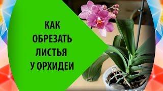 Как Обрезать Листья у Орхидеи(, 2015-10-27T18:12:43.000Z)