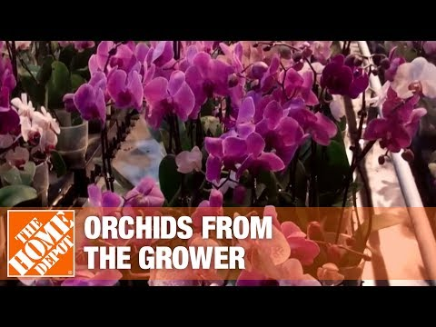 Getting Orchids from the Growers to Market Part 1 | The Home Depot