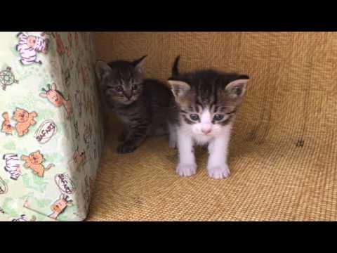 아파트 길고양이가 낳은 아기고양이들