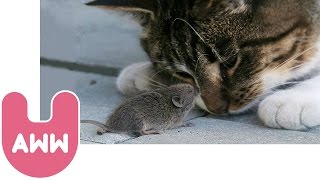 Cat and Mouse Become Best Friends