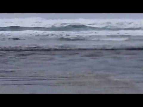 TOFINo BEST Surfer BEACH LONG BEACH #1 Canada organic 100% natural WEST COAST TRAIL SEAWEED