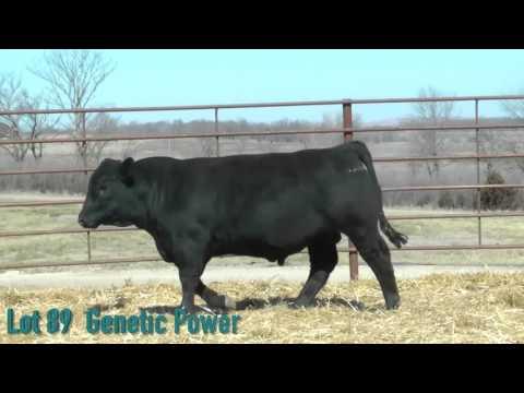 Lot 89 Genetic Power