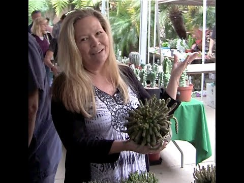 Succulent Shopping with Jeanne Meadow at the San go Cactus ... on home depot filter for pond, home depot large cactus, home depot ground covers, home depot store, home depot yucca, home depot wagon wheels, home depot mantis tiller, home depot do it yourself, home depot flowering bushes, home depot shopping, home depot projects, home depot succulents and cactus, home depot item lookup, home cactus plants care, home depot product search, home depot opuntia, home depot clips, home depot palms, home depot san pedro cactus, home depot cactus gardens,