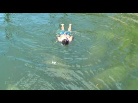 Swimming with Manatees in Gulf Harbors North Channel in New Port Richey, Florida