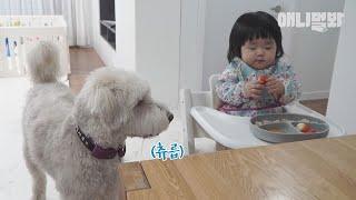 막냇동생 먹는 것만 봐도 배부르다는 개오빠 (침은 좀 닦고 말하자..)ㅣHow To Raise Big Dog…
