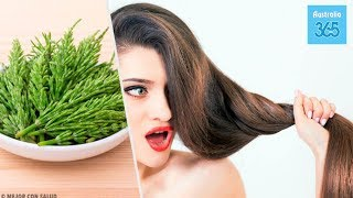 How to Use Horsetail to Help with Hair Growth - Australia 365