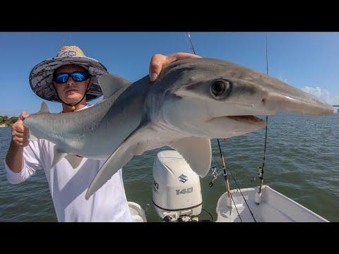 World RECORD Bonnethead Shark! Catch Clean Cook (Sebastian Inlet, Florida)