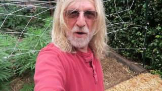 Cannabis Cultivation: Bending Marijuana & Compost Tea (AACT)