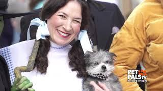 Pet Pals TV episode - Mutt Strut and A Dog's Journey