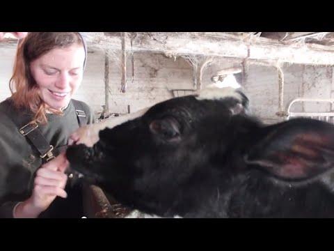 NYFC Bootstrap Videos: Chaseholm Farm
