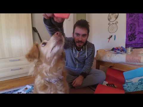 Pet World Box:Ένα ξεχωριστό Unboxing για κατοικίδια!