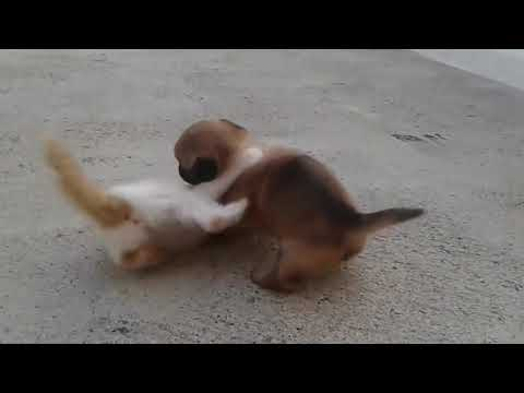 kittens and puppies are fighting.........too cute