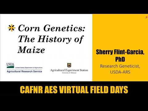 Corn Genetics: The History Of Maize - Sherry Flint-Garcia