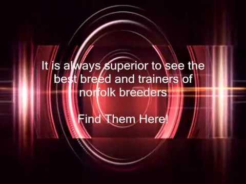 Norfolk Breeders - Find Them Now!