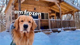 My Dog Rents a Log Cabin