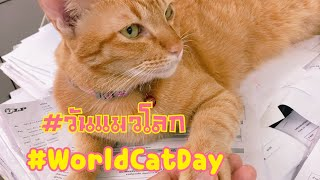 #WorldCatDay วันแมวโลก  #WorldCatDay