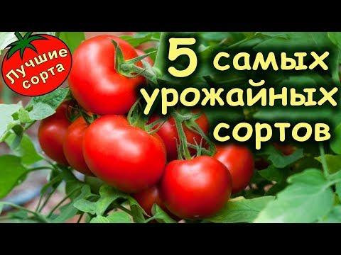 САМЫЕ УРОЖАЙНЫЕ СОРТА ТОМАТОВ 2019 (лучшие сорта томатов)