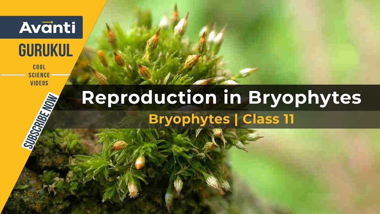 Bryophytes Class 11 | Moss | Reproduction in Bryophytes | Liverwort | Plant  Kingdom