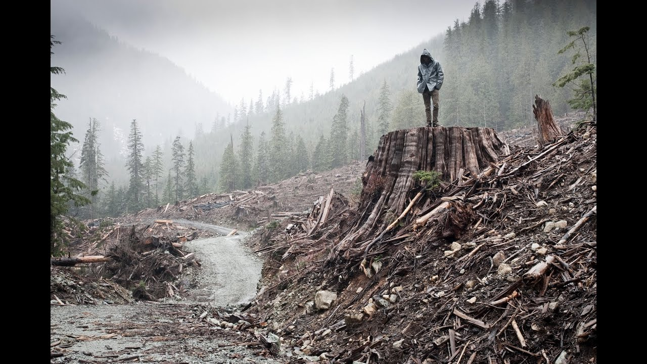 Image result for if a tree falls a story of the earth liberation front