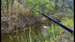 В РУЧЬЕ РЫБА ЛОМАЕТ УДОЧКИ!!Килограммовый язь,крупный окунь,карась ,лещ плотва.Рыбалка 2020